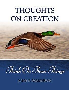 Thoughts On Creation